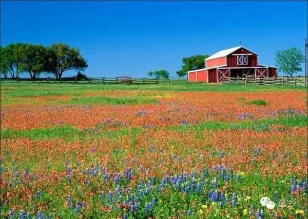 首页 亲子 正文  花海营地  炎炎夏日,遍地的鲜花,五颜六色,这里再也